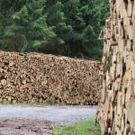 drewno Rzeszów